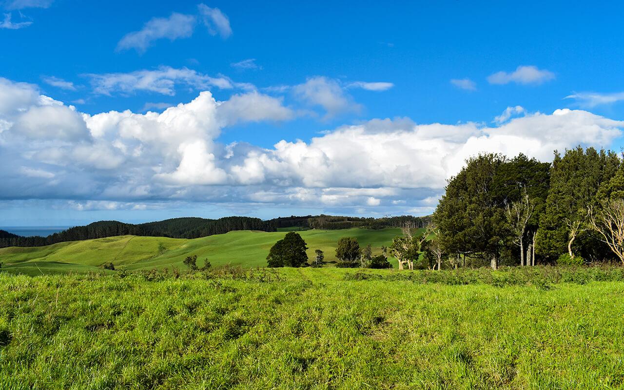 lesterlost-travel-new-zealand-north-island-coromandel-peninsula-hills (1)