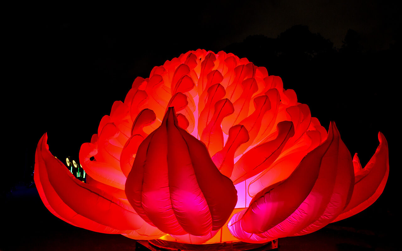 The Vivid Festival is a great thing to do in Sydney for free during the winter