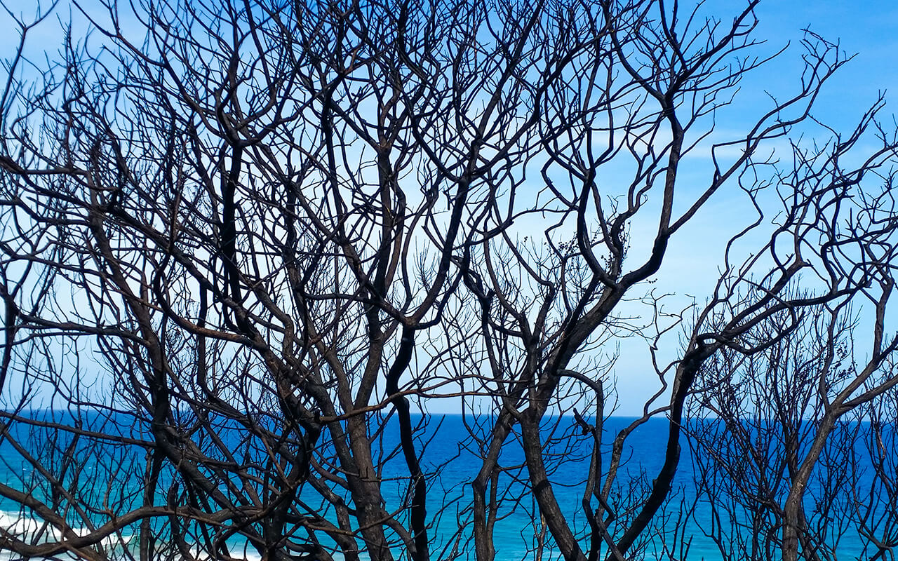 lesterlost-travel-australia-victoria-great-ocean-road-coast-burnt-trees (1)