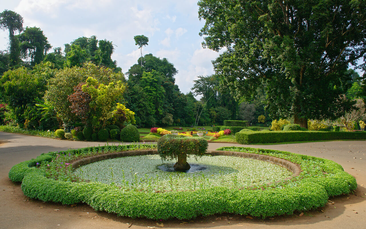 Visiting the Peradeniya Botanical Gardens is a great thing to do in Kandy