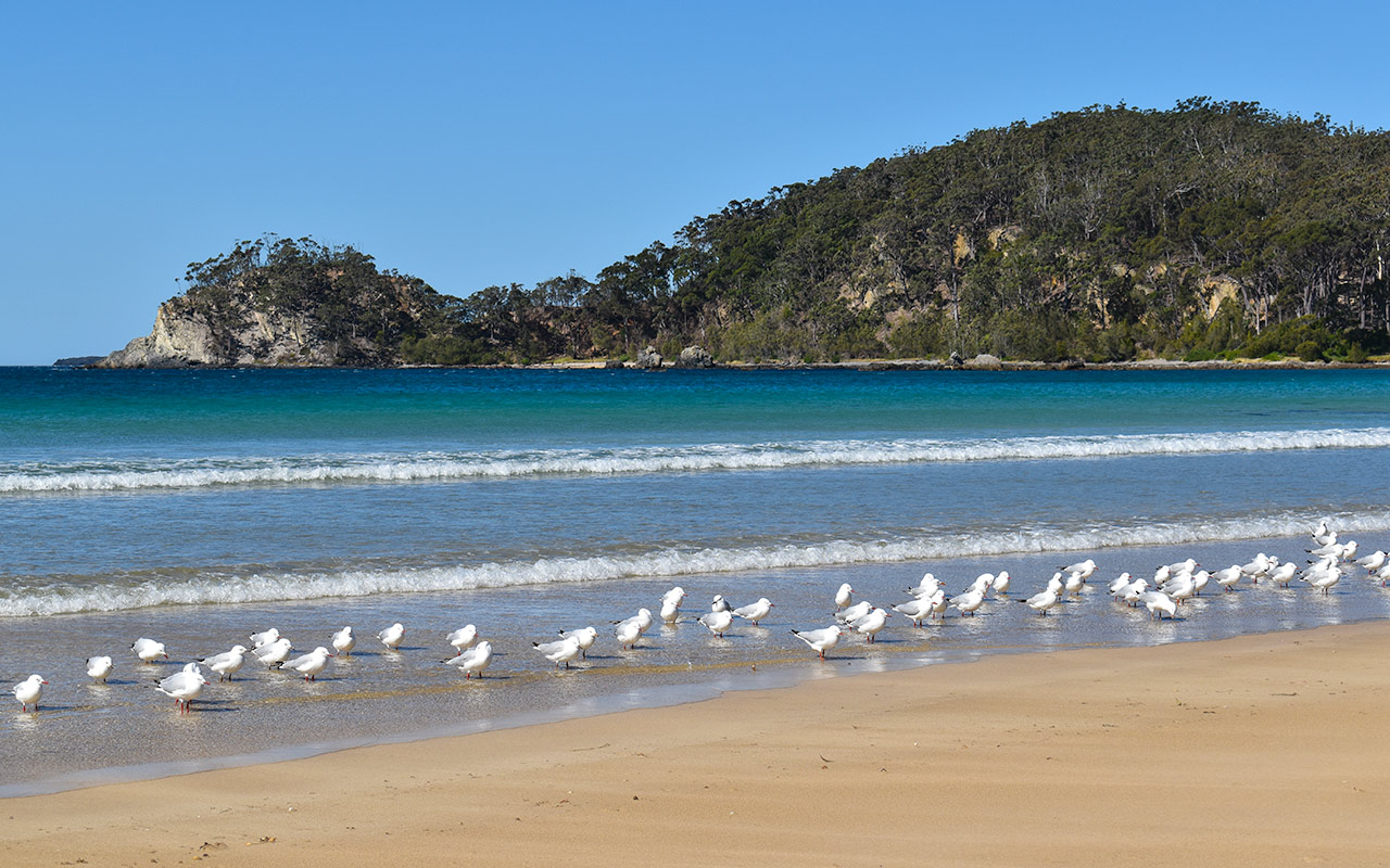 Surf Beach at Batemans Bay NSW is where the seagulls like to relax