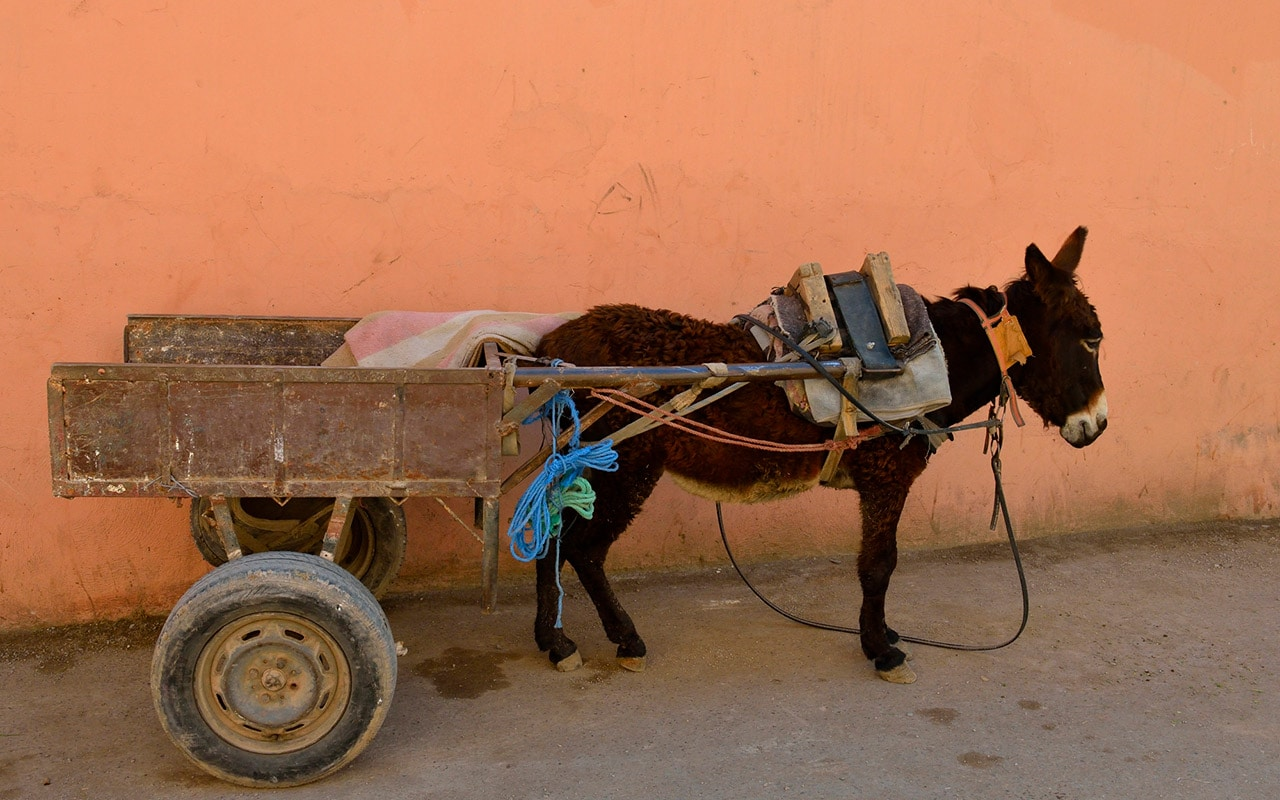 Would you try travelling around Morocco in a donkey cart?