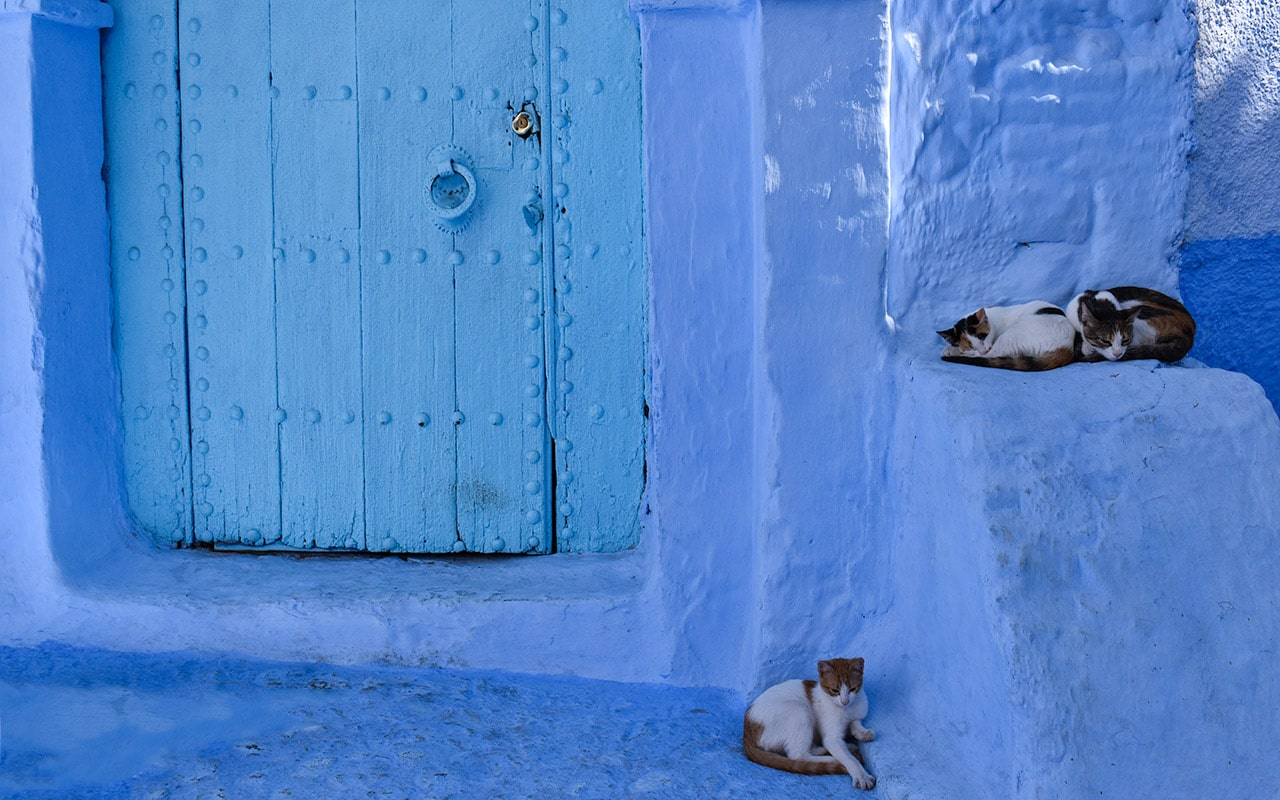 Cats sleeping in the blue streets of Chefchaouen