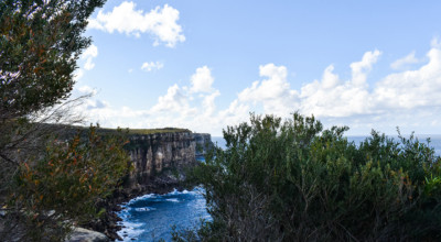 View the beautiful cliffs of the North Head Manly Walk