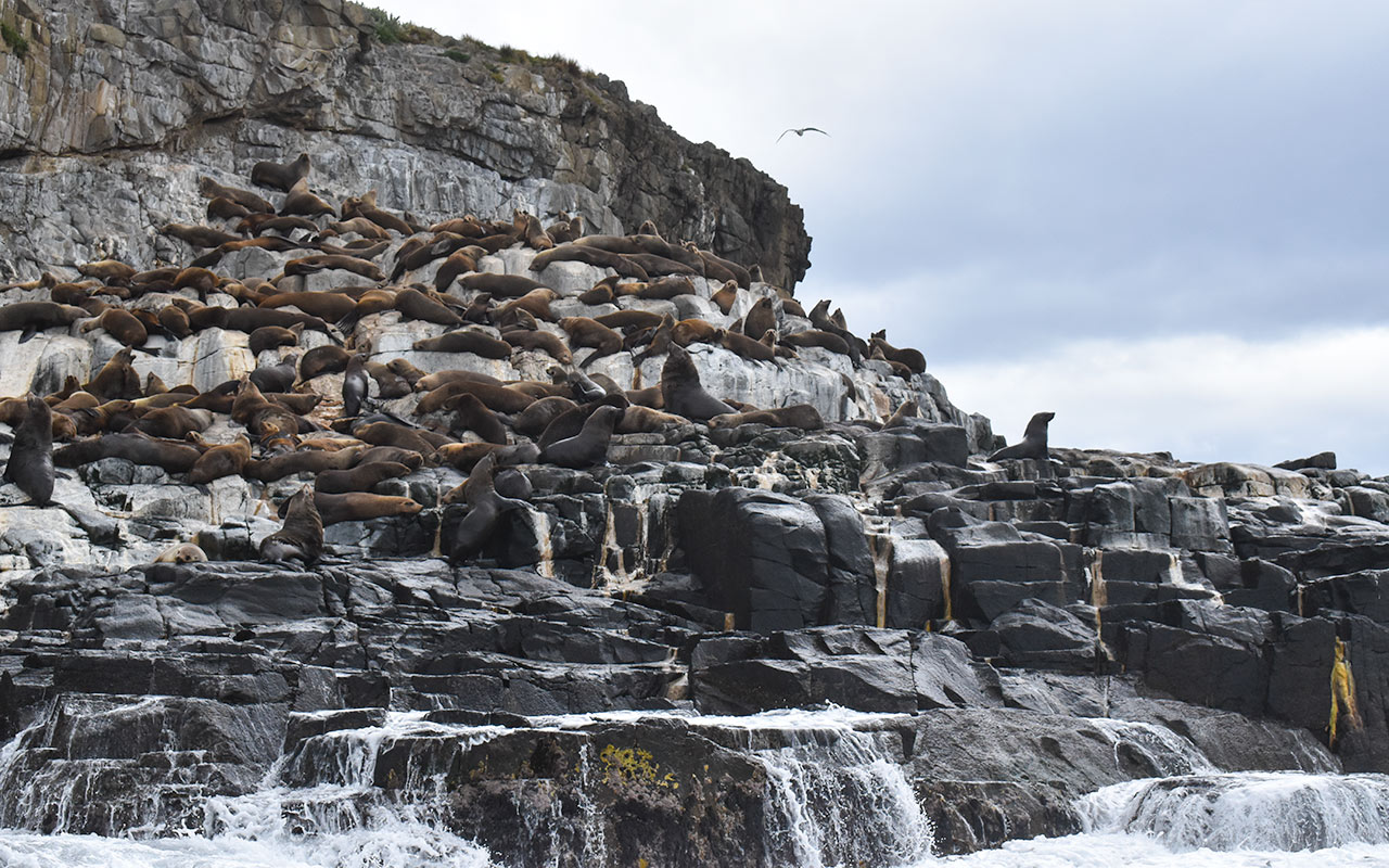 The seal colonies of Boreel Head are a great example of Bruny Island wildlife
