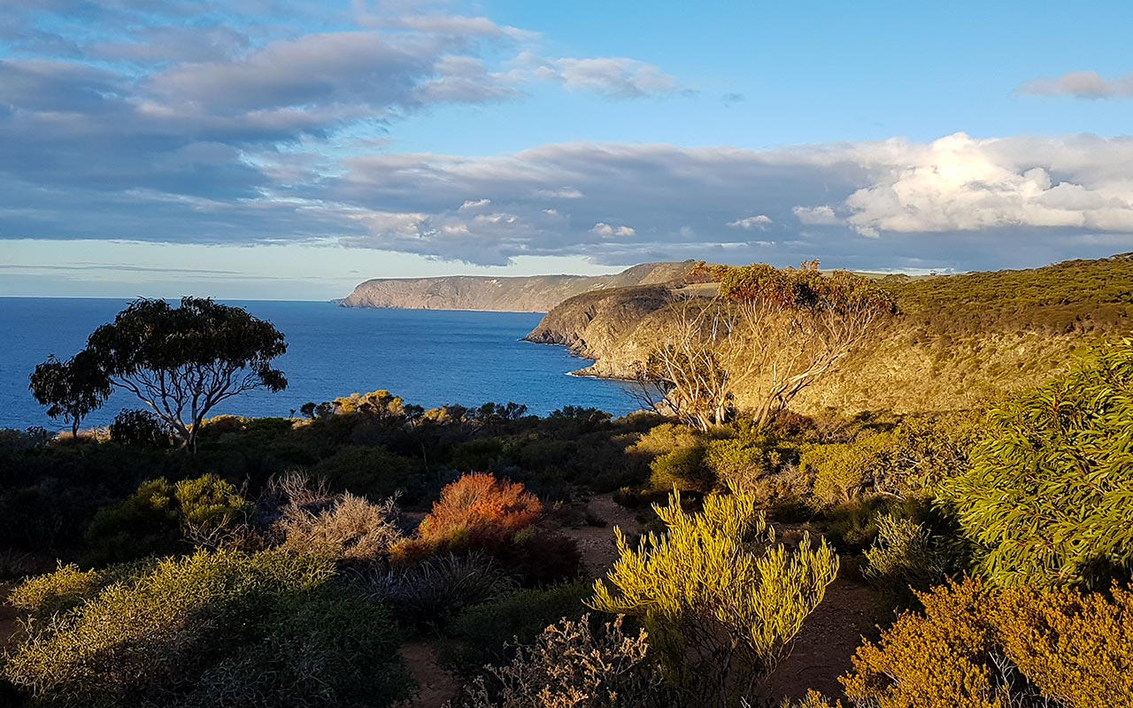 Add the beautiful view from Scott Cove to your Kangaroo Island itinerary