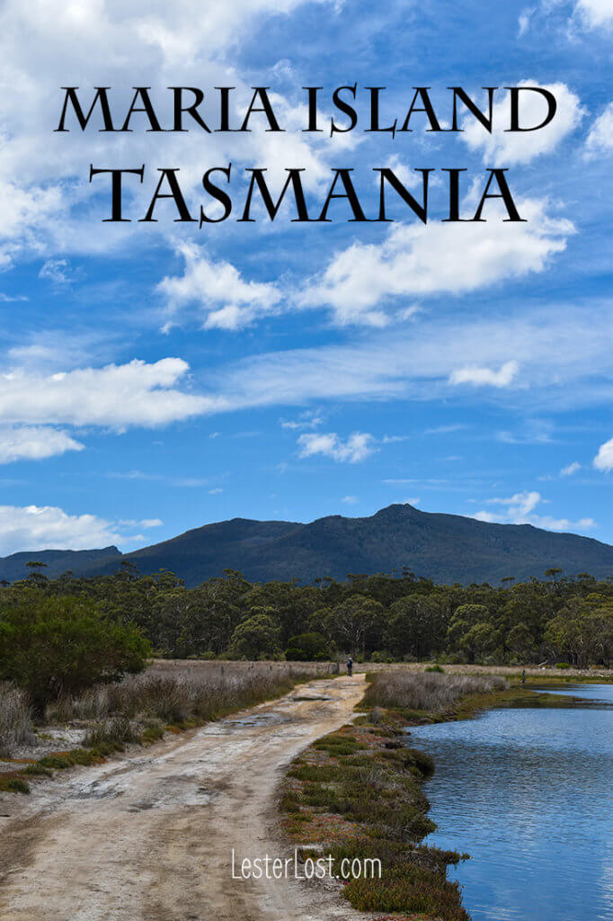 Take a day trip to Maria Island Tasmania